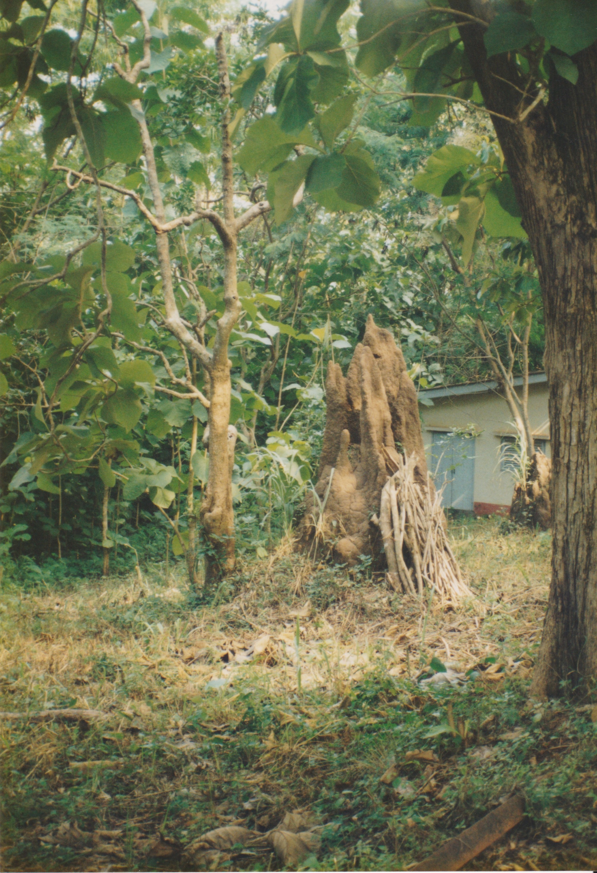 Termite mound in West Africa