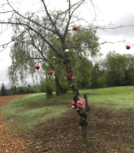Photo of tree along trail with ornaments