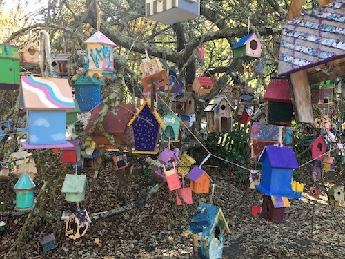 A close-in photo of birdhouses on a tree