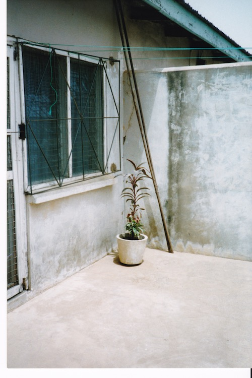 Corner of a courtyard with window on the left with metal security bars and a plant in a concrete planter in the corner